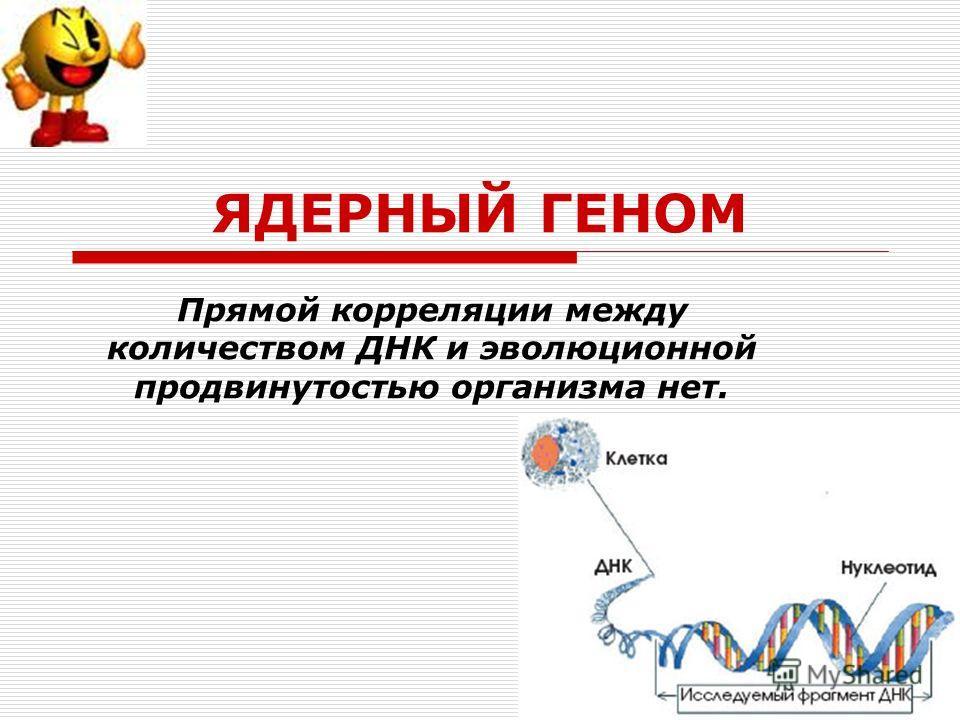 ЯДЕРНЫЙ ГЕНОМ Прямой корреляции между количеством ДНК и эволюционной продвинутостью организма нет.