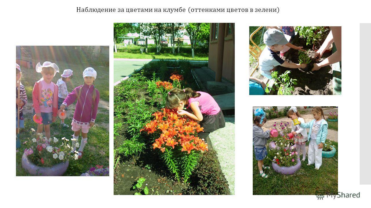 Наблюдение за цветами на клумбе (оттенками цветов в зелени)