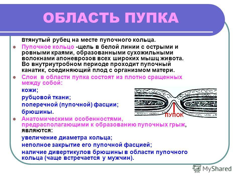 ОБЛАСТЬ ПУПКА В тянутый рубец на месте пупочного кольца. Пупочное кольцо -щель в белой линии с острыми и ровными краями, образованными сухожильными волокнами апоневрозов всех широких мышц живота. Во внутриутробном периоде проходит пупочный канатик, с