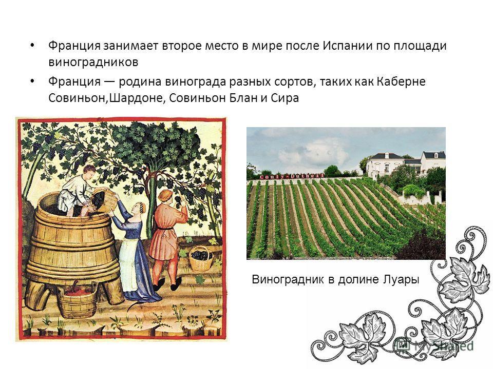 Франция занимает второе место в мире после Испании по площади виноградников Франция родина винограда разных сортов, таких как Каберне Совиньон,Шардоне, Совиньон Блан и Сира Виноградник в долине Луары