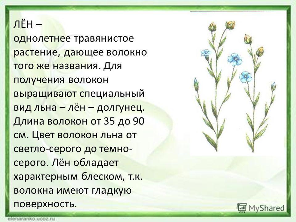 ЛЁН – однолетнее травянистое растение, дающее волокно того же названия. Для получения волокон выращивают специальный вид льна – лён – долгунец. Длина волокон от 35 до 90 см. Цвет волокон льна от светло-серого до темно- серого. Лён обладает характерны