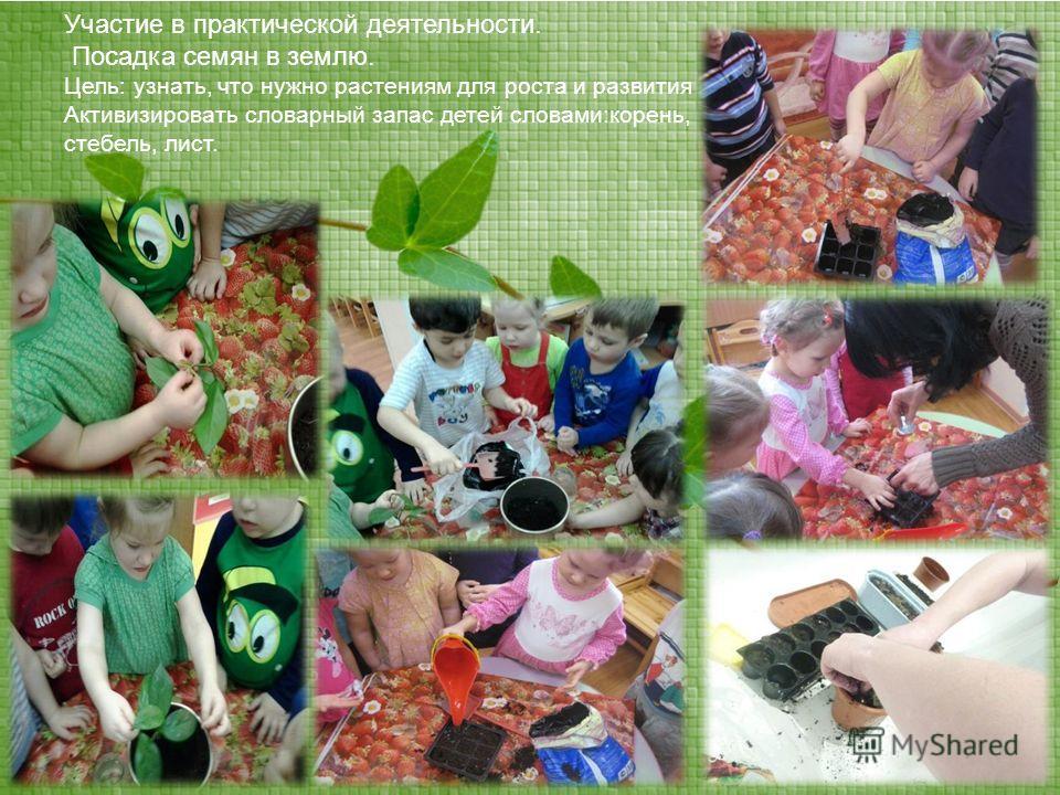 Участие в практической деятельности. Посадка семян в землю. Цель: узнать, что нужно растениям для роста и развития Активизировать словарный запас детей словами:корень, стебель, лист.