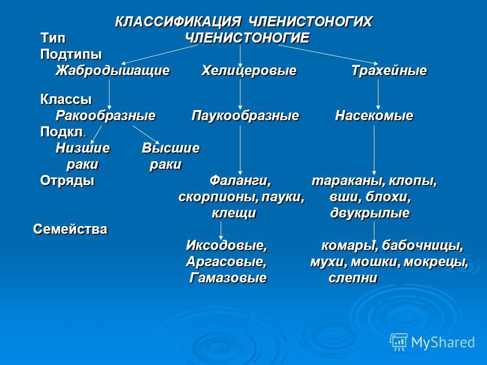 КЛАССИФИКАЦИЯ ЧЛЕНИСТОНОГИХ КЛАССИФИКАЦИЯ ЧЛЕНИСТОНОГИХ Тип ЧЛЕНИСТОНОГИЕ Тип ЧЛЕНИСТОНОГИЕ Подтипы Подтипы Жабродышащие Хелицеровые Трахейные Жабродышащие Хелицеровые Трахейные Классы Классы Ракообразные Паукообразные Насекомые Ракообразные Паукообр