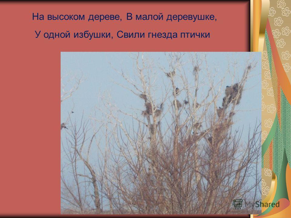 На высоком дереве, В малой деревушке, У одной избушки, Свили гнезда птички