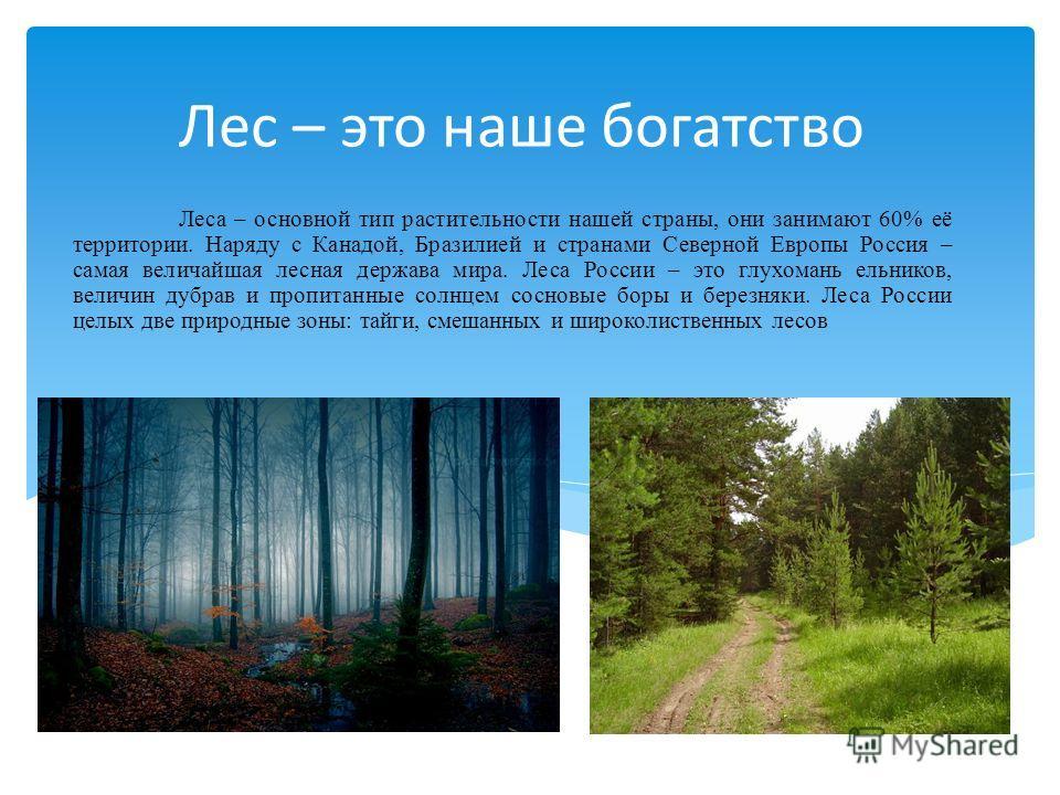 Лес – это наше богатство Леса – основной тип растительности нашей страны, они занимают 60% её территории. Наряду с Канадой, Бразилией и странами Северной Европы Россия – самая величайшая лесная держава мира. Леса России – это глухомань ельников, вели