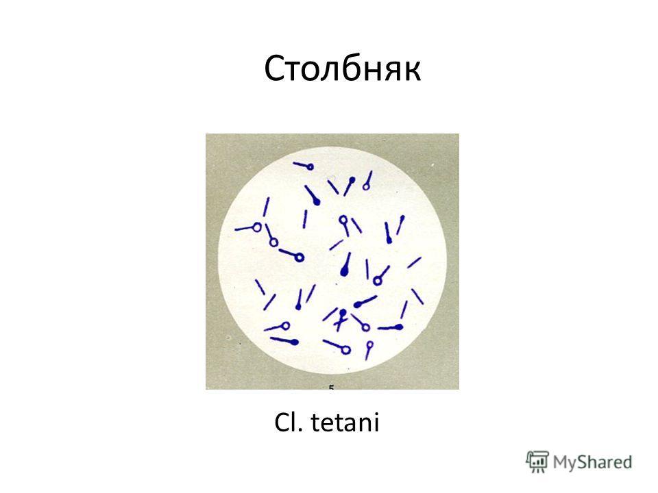 Столбняк Cl. tetani