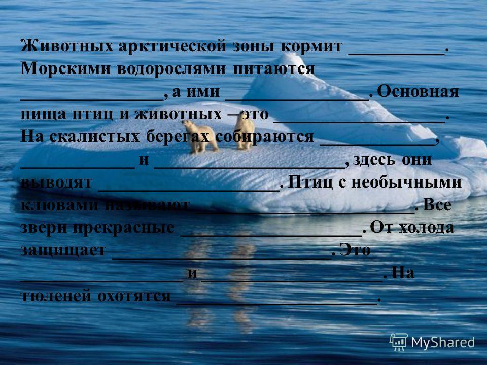 Животных арктической зоны кормит __________. Морскими водорослями питаются _______________, а ими _______________. Основная пища птиц и животных – это __________________. На скалистых берегах собираются ____________, ____________ и __________________