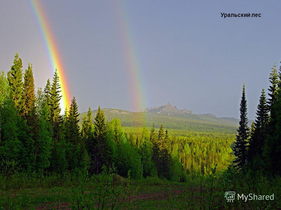 Уральский лес