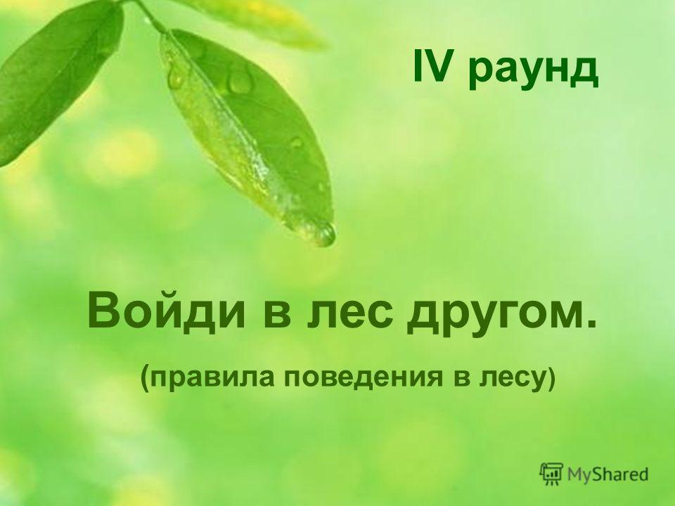 Войди в лес другом. (правила поведения в лесу ) IV раунд