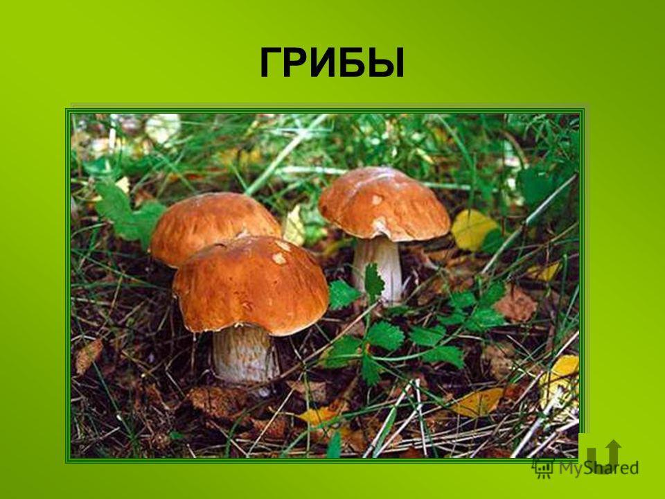 Особый организм, не образующий цветков и семян и размножающийся спорами.