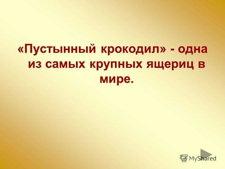 ФЕНЕК