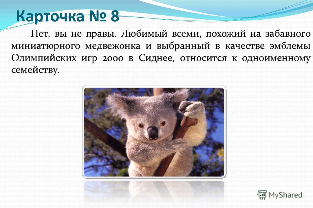 Карточка 8 Нет, вы не правы. Любимый всеми, похожий на забавного миниатюрного медвежонка и выбранный в качестве эмблемы Олимпийских игр 2000 в Сиднее, относится к одноименному семейству. Вернитесь к карточке 23 карточке 23