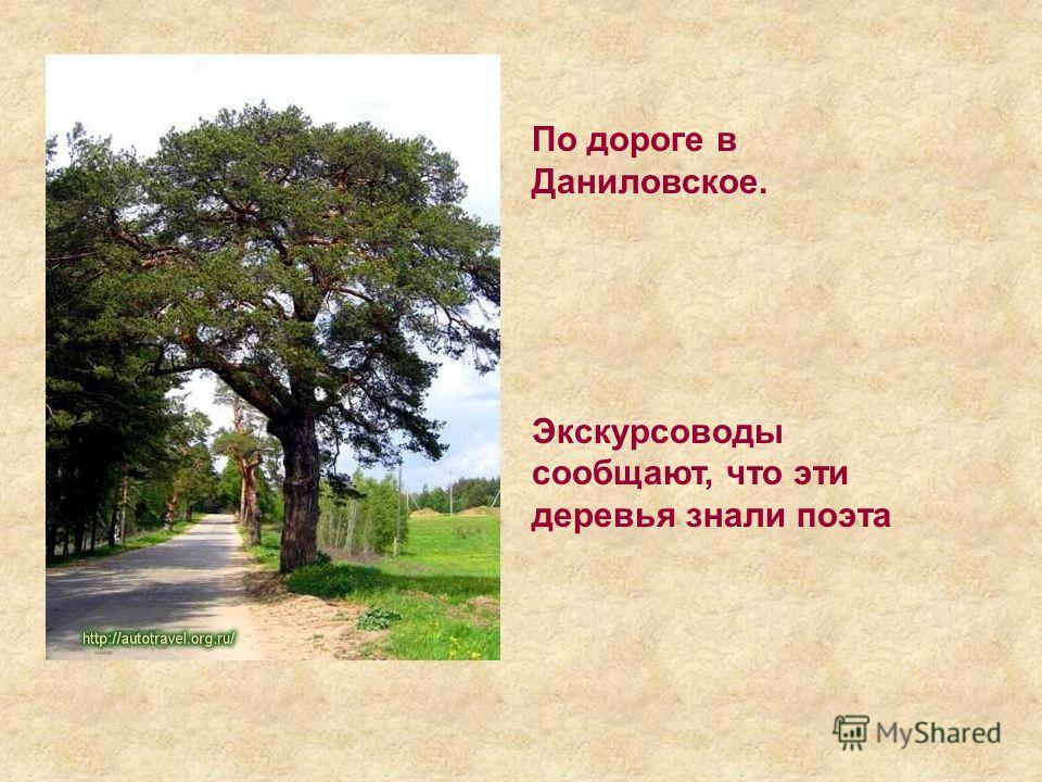 По дороге в Даниловское. Экскурсоводы сообщают, что эти деревья знали поэта