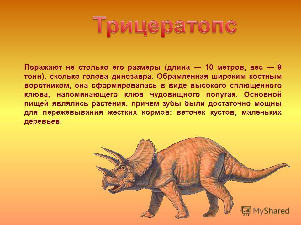 Поражают не столько его размеры (длина 10 метров, вес 9 тонн), сколько голова динозавра. Обрамленная широким костным воротником, она сформировалась в виде высокого сплющенного клюва, напоминающего клюв чудовищного попугая. Основной пищей являлись рас
