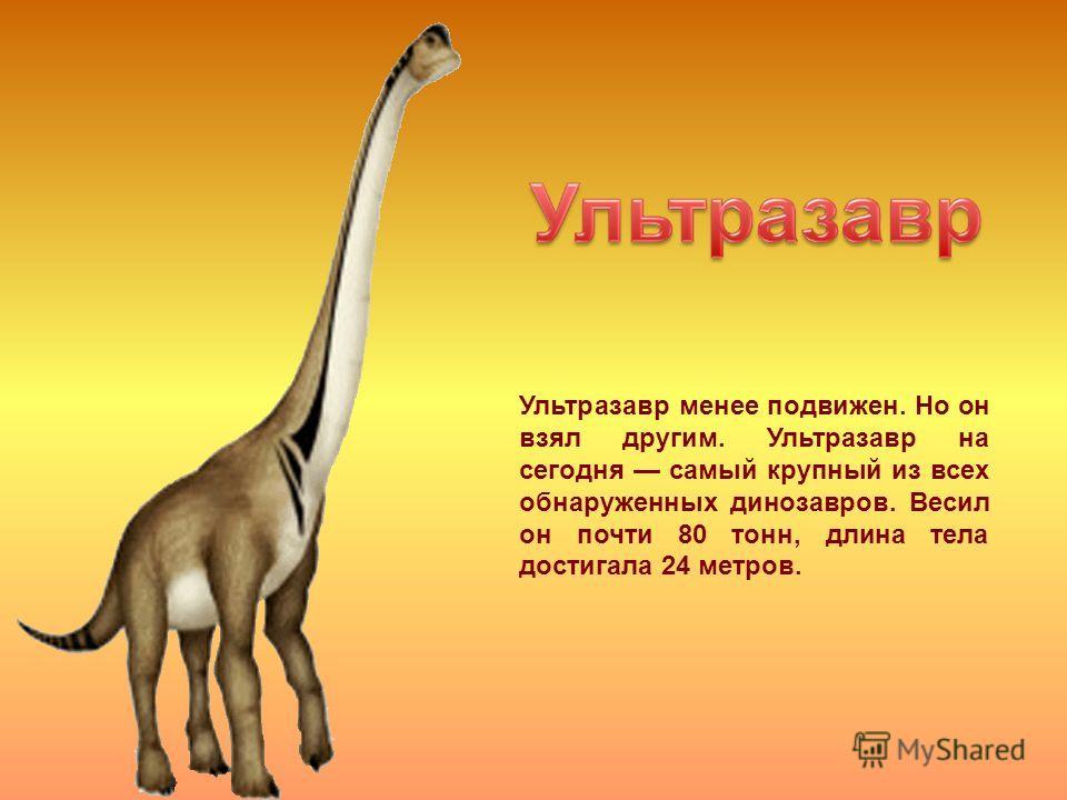 Ультразавр менее подвижен. Но он взял другим. Ультразавр на сегодня самый крупный из всех обнаруженных динозавров. Весил он почти 80 тонн, длина тела достигала 24 метров.
