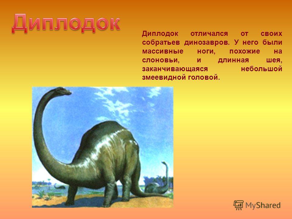 Диплодок отличался от своих собратьев динозавров. У него были массивные ноги, похожие на слоновьи, и длинная шея, заканчивающаяся небольшой змеевидной головой.