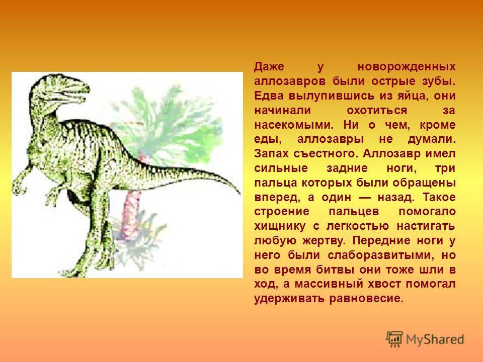 Даже у новорожденных аллозавров были острые зубы. Едва вылупившись из яйца, они начинали охотиться за насекомыми. Ни о чем, кроме еды, аллозавры не думали. Запах съестного. Аллозавр имел сильные задние ноги, три пальца которых были обращены вперед, а