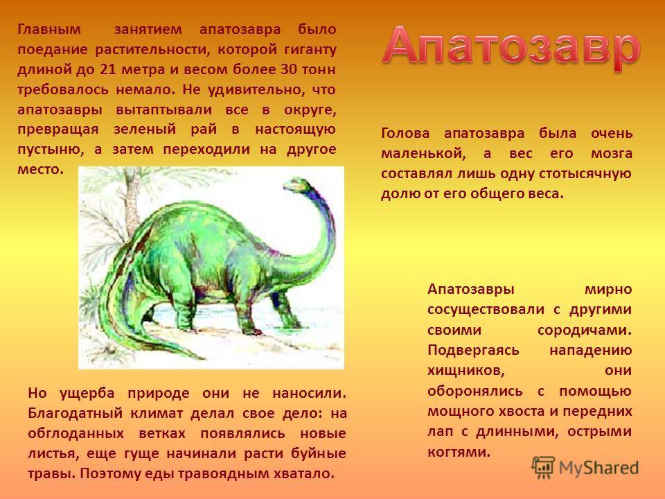 Главным занятием апатозавра было поедание растительности, которой гиганту длиной до 21 метра и весом более 30 тонн требовалось немало. Не удивительно, что апатозавры вытаптывали все в округе, превращая зеленый рай в настоящую пустыню, а затем переход