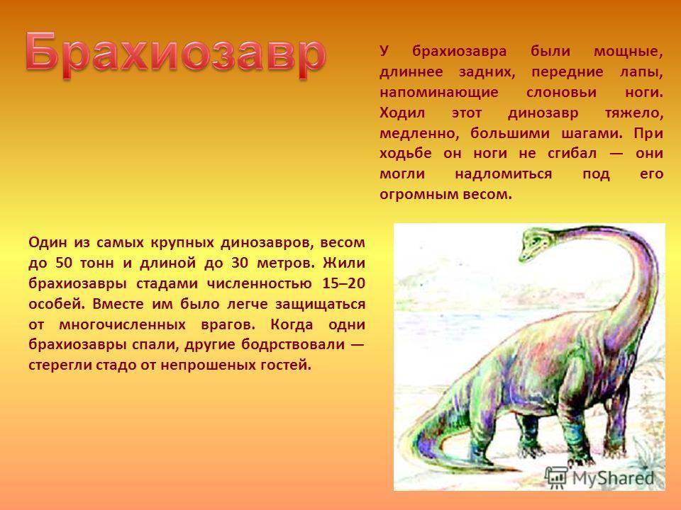 Один из самых крупных динозавров, весом до 50 тонн и длиной до 30 метров. Жили брахиозавры стадами численностью 15–20 особей. Вместе им было легче защищаться от многочисленных врагов. Когда одни брахиозавры спали, другие бодрствовали стерегли стадо о