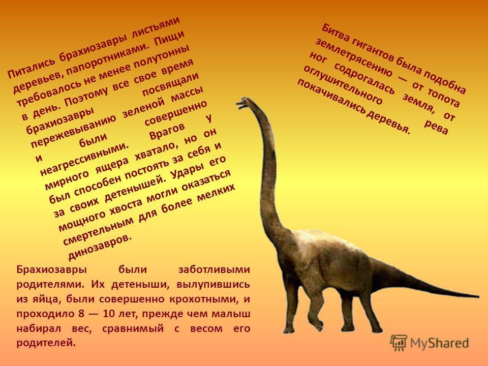 Питались брахиозавры листьями деревьев, папоротниками. Пищи требовалось не менее полутонны в день. Поэтому все свое время брахиозавры посвящали пережевыванию зеленой массы и были совершенно неагрессивными. Врагов у мирного ящера хватало, но он был сп
