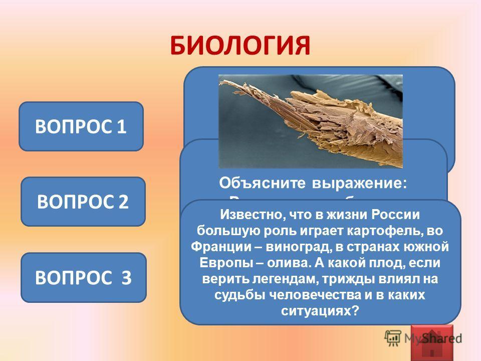 БИОЛОГИЯ ВОПРОС 1 ВОПРОС 2 Объясните выражение: «Растет, как гриб после дождя». ВОПРОС 3 Известно, что в жизни России большую роль играет картофель, во Франции – виноград, в странах южной Европы – олива. А какой плод, если верить легендам, трижды вли