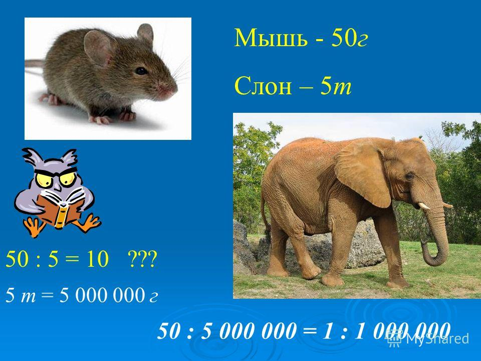 Мышь - 50 г Слон – 5 т 50 : 5 = 10 ??? 50 : 5 000 000 = 1 : 1 000 000 5 т = 5 000 000 г
