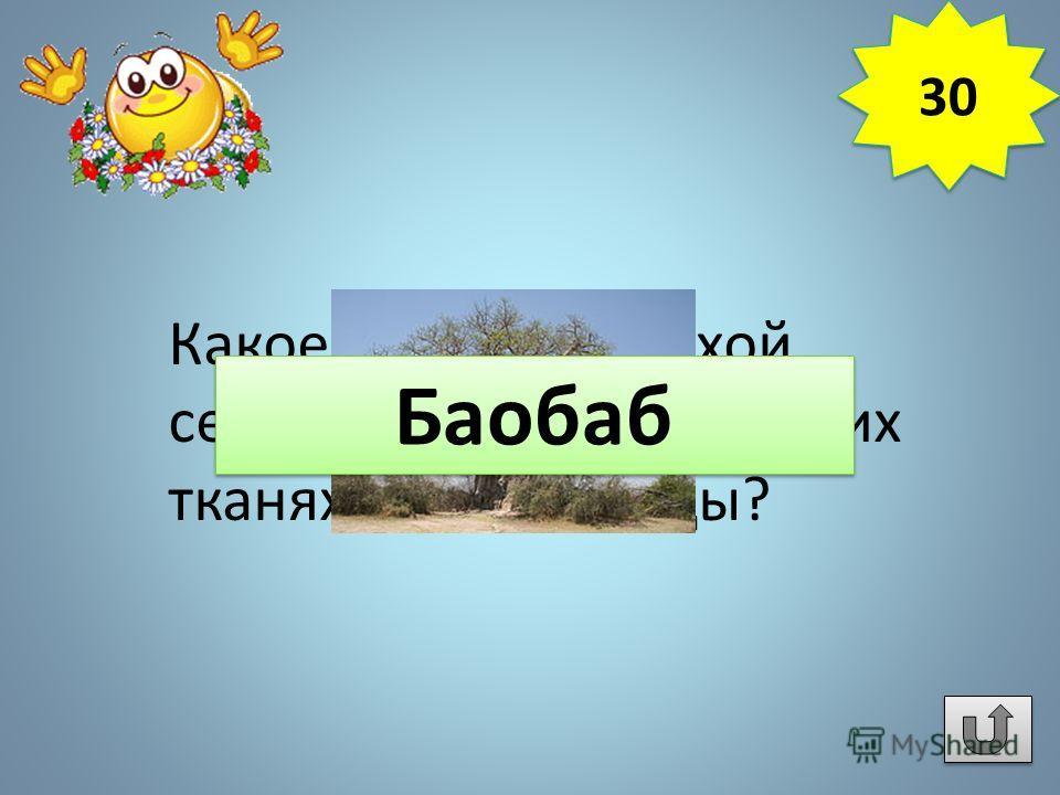 Какое дерево на сухой сезон накапливает в своих тканях до 120 т воды? 30 Баобаб