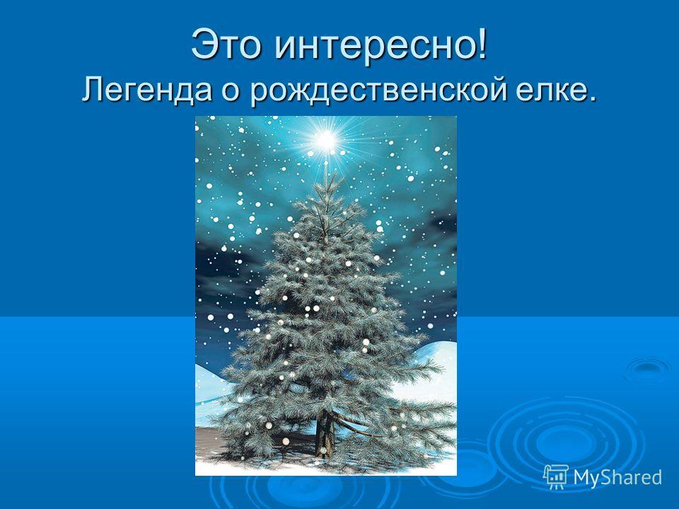 Это интересно! Легенда о рождественской елке.