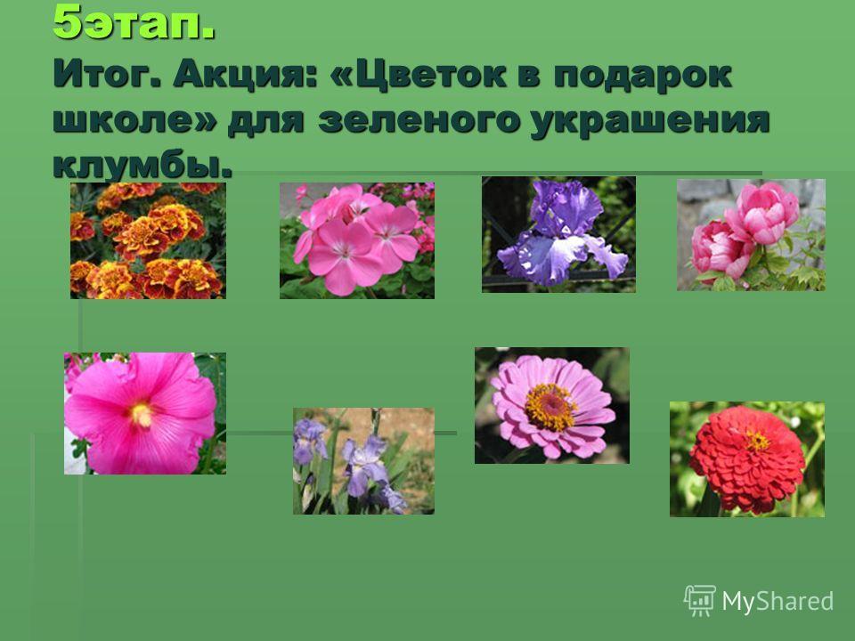 5 этап. Итог. Акция: «Цветок в подарок школе» для зеленого украшения клумбы.
