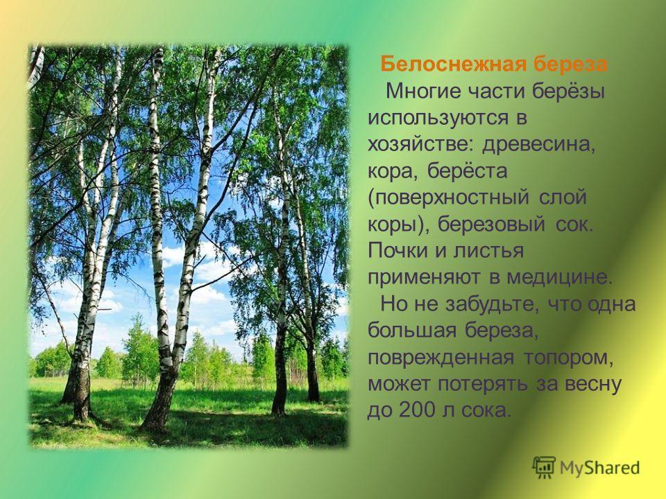 Дуб - мощь и величественная красота дуба привлекают всех. Корни его уходят глубоко в землю, и поэтому ему не страшны никакие бури. Посев желудей является основным способом восстановления дубовых лесов. Жёлуди служат хорошим кормом для животных