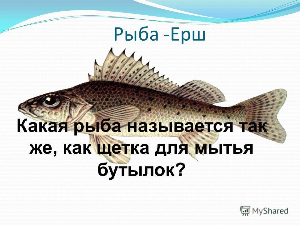 Рыба -Ерш Какая рыба называется так же, как щетка для мытья бутылок?
