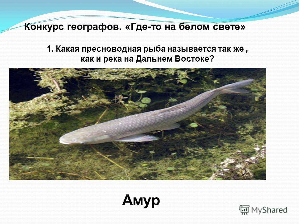 Конкурс географов. «Где-то на белом свете» 1. Какая пресноводная рыба называется так же, как и река на Дальнем Востоке? Амур