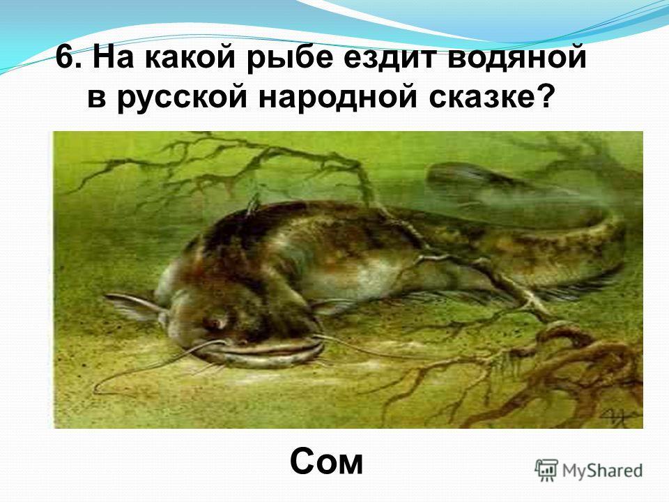 6. На какой рыбе ездит водяной в русской народной сказке? Сом