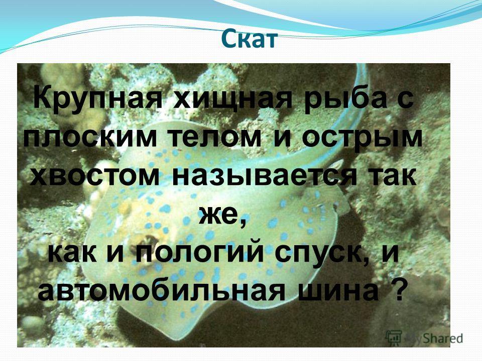 Скат Крупная хищная рыба с плоским телом и острым хвостом называется так же, как и пологий спуск, и автомобильная шина ?