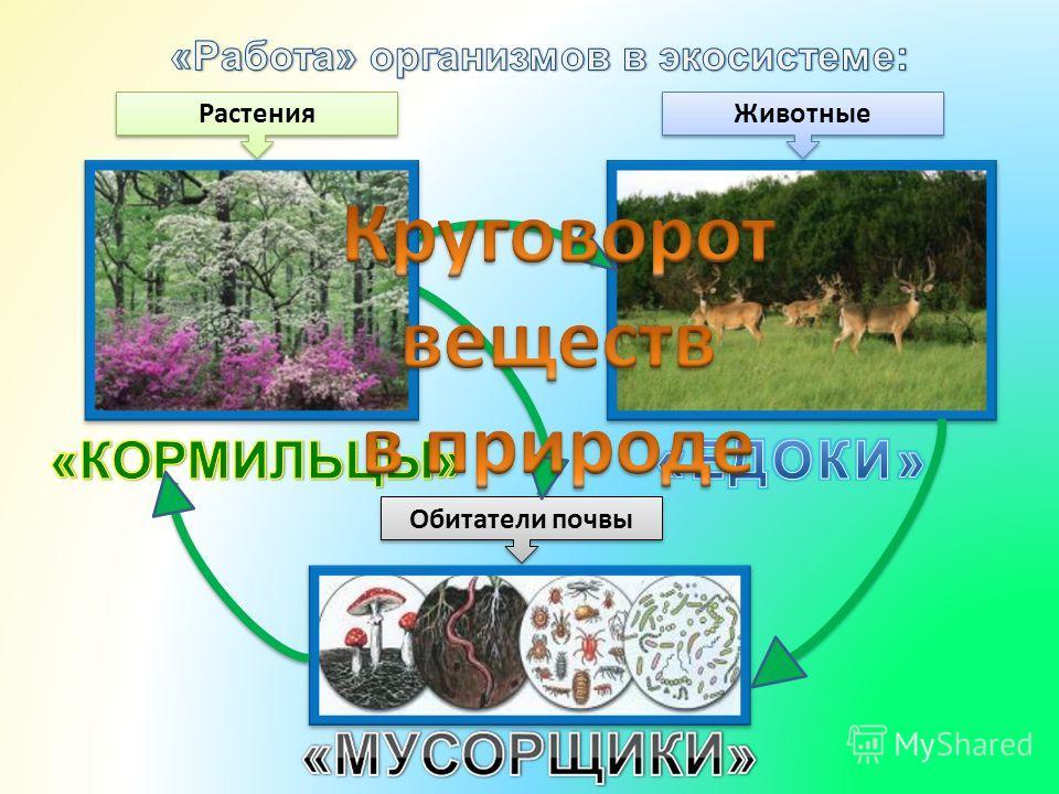 Растения Животные Обитатели почвы