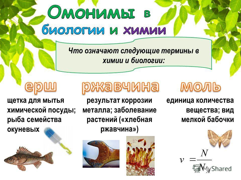 Что означают следующие термины в химии и биологии: щетка для мытья химической посуды; рыба семейства окуневых единица количества вещества; вид мелкой бабочки результат коррозии металла; заболевание растений («хлебная ржавчина»)