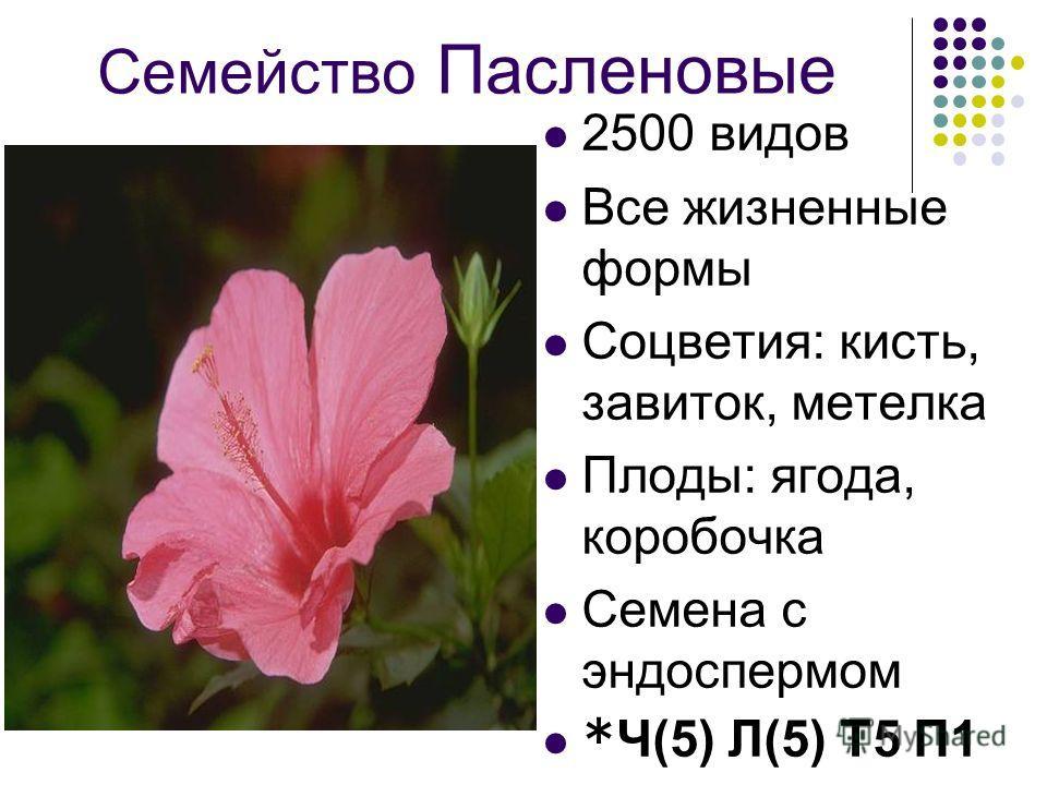 Семейство Пасленовые 2500 видов Все жизненные формы Соцветия: кисть, завиток, метелка Плоды: ягода, коробочка Семена с эндоспермом *Ч(5) Л(5) Т5 П1