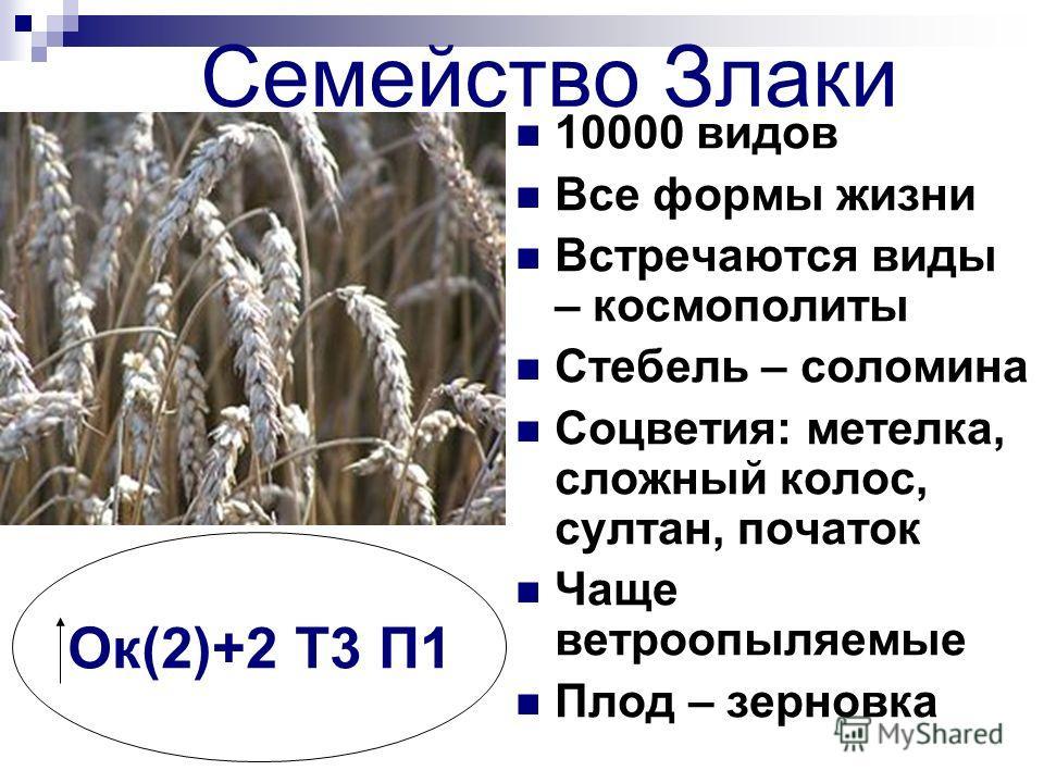 Семейство Злаки 10000 видов Все формы жизни Встречаются виды – космополиты Стебель – соломина Соцветия: метелка, сложный колос, султан, початок Чаще ветроопыляемые Плод – зерновка Ок(2)+2 Т3 П1