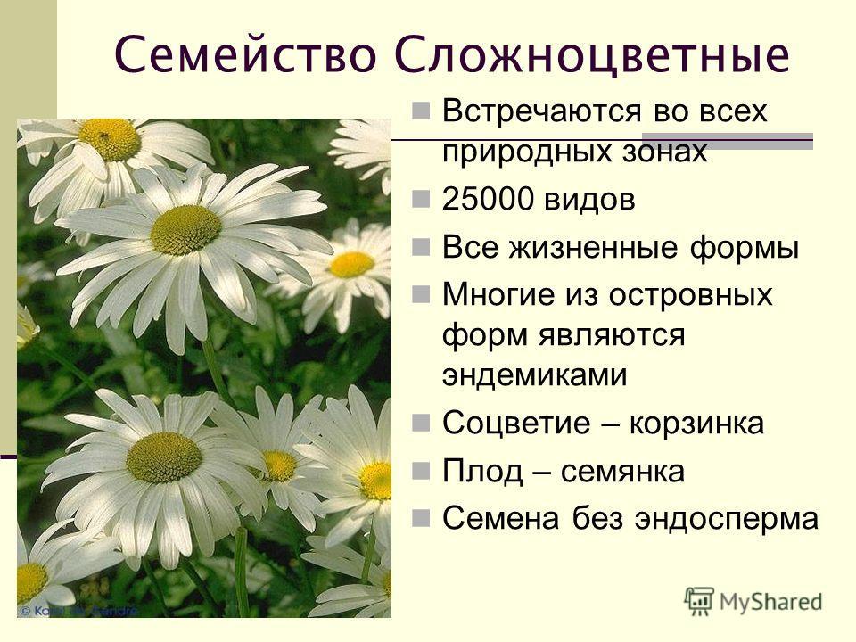 Семейство Сложноцветные Встречаются во всех природных зонах 25000 видов Все жизненные формы Многие из островных форм являются эндемиками Соцветие – корзинка Плод – семянка Семена без эндосперма