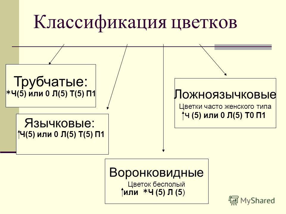 Классификация цветков Трубчатые: *Ч(5) или 0 Л(5) Т(5) П1 Ч(5) или 0 Л(5) Т(5) П1 Язычковые: Воронковидные Цветок бесполый или *Ч (5) Л (5) Ложноязычковые Цветки часто женского типа Ч (5) или 0 Л(5) Т0 П1