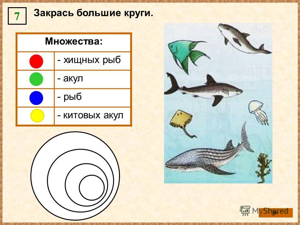 Закрась большие круги. 7 Множества: - хищных рыб - акул - рыб - китовых акул