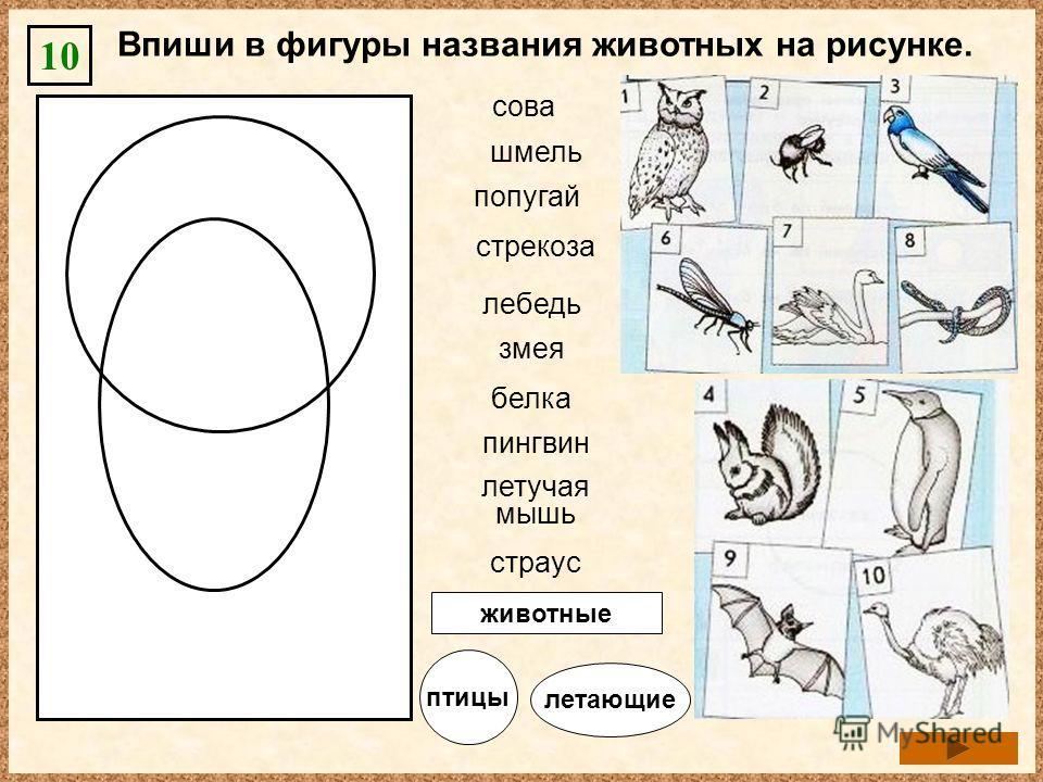 Впиши в фигуры названия животных на рисунке. 10 пингвин страус попугай лебедь белка змея сова шмель стрекоза летучая мышь животные птицы летающие