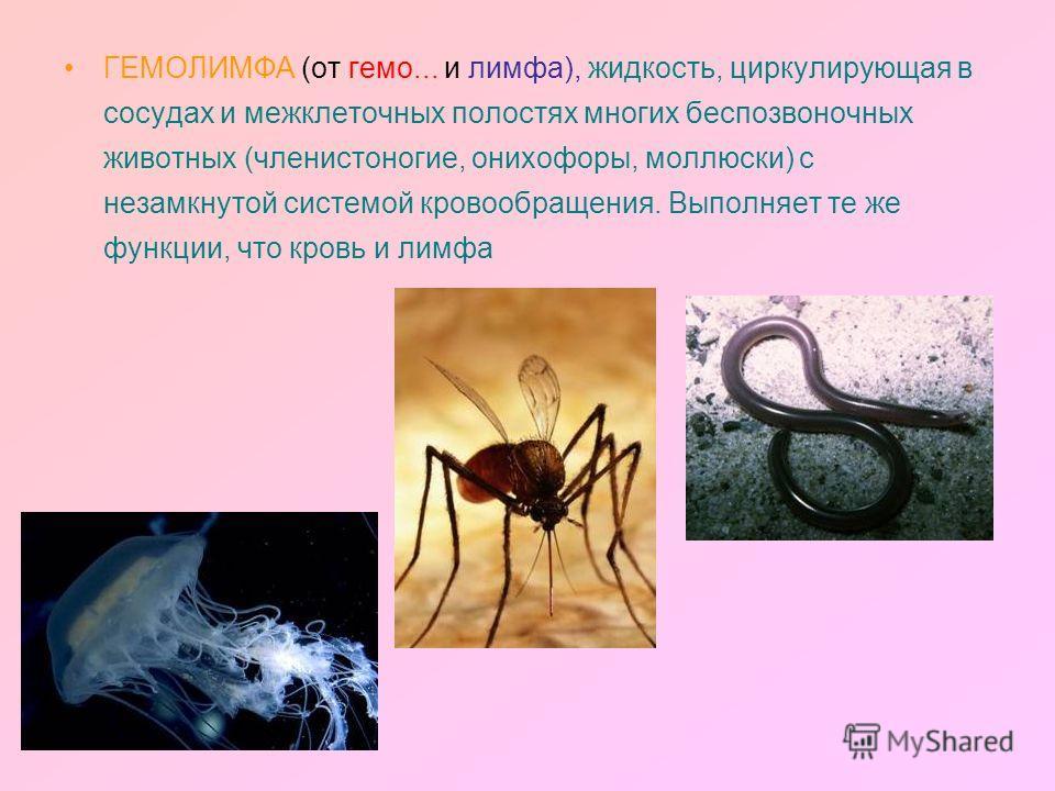ГЕМОЛИМФА (от гемо... и лимфа), жидкость, циркулирующая в сосудах и межклеточных полостях многих беспозвоночных животных (членистоногие, онихофоры, моллюски) с незамкнутой системой кровообращения. Выполняет те же функции, что кровь и лимфа
