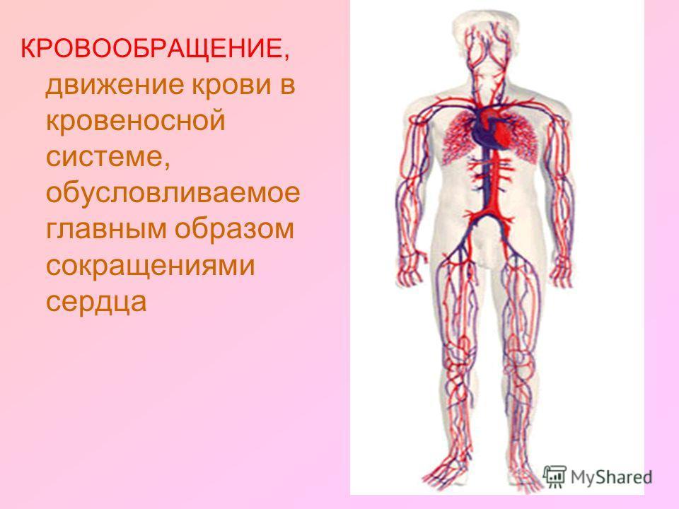 КРОВООБРАЩЕНИЕ, движение крови в кровеносной системе, обусловливаемое главным образом сокращениями сердца