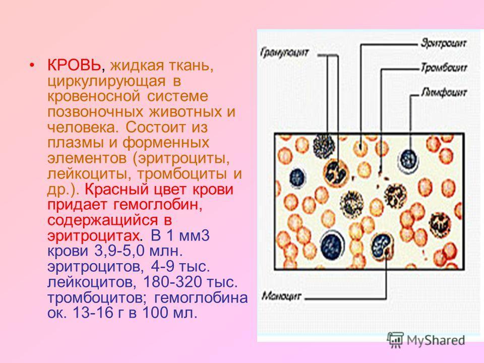 КРОВЬ, жидкая ткань, циркулирующая в кровеносной системе позвоночных животных и человека. Состоит из плазмы и форменных элементов (эритроциты, лейкойциты, тромбоциты и др.). Красный цвет крови придает гемоглобин, содержащийся в эритроцитах. В 1 мм 3