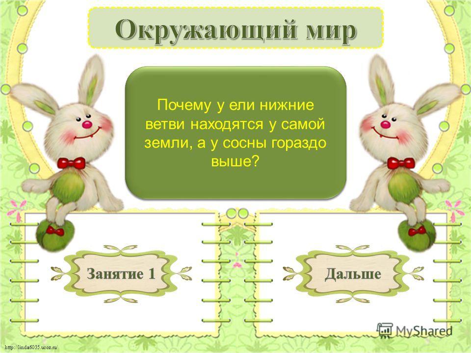 http://linda6035.ucoz.ru/ Сосна - светолюбивое растение - 2 б. Почему у ели нижние ветви находятся у самой земли, а у сосны гораздо выше?
