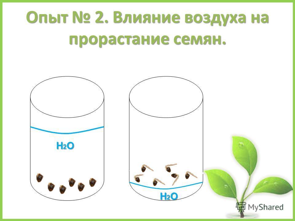 Опыт 2. Влияние воздуха на прорастание семян. Н2ОН2ОН2ОН2О Н2ОН2ОН2ОН2О