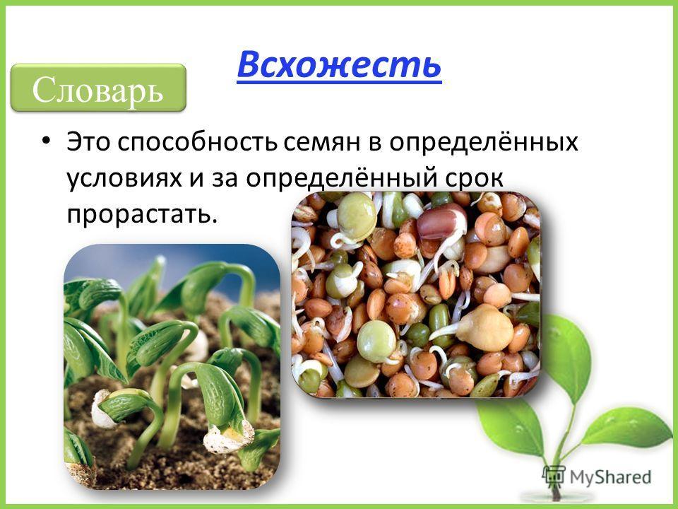 Всхожесть Это способность семян в определённых условиях и за определённый срок прорастать. Словарь