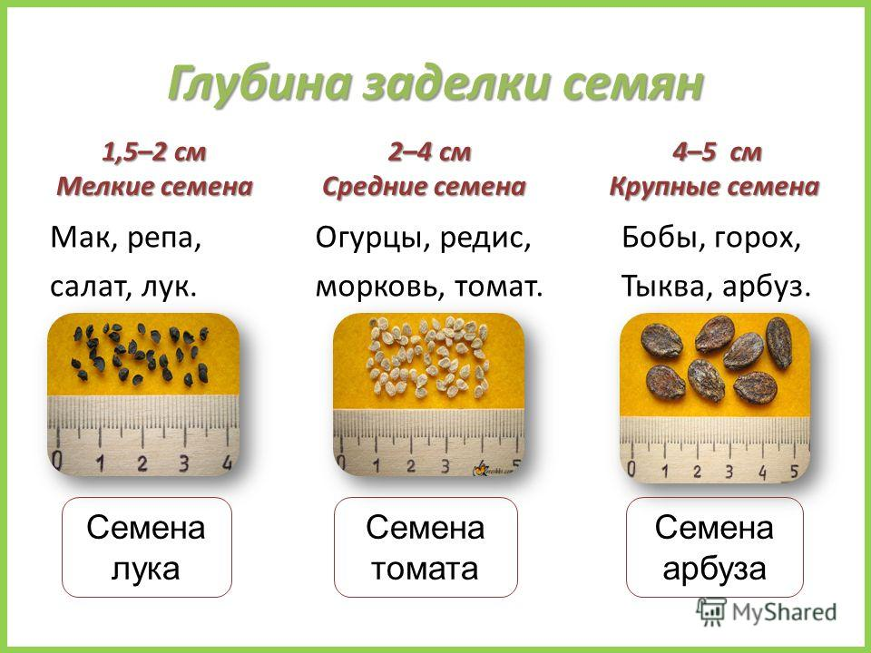 Глубина заделки семян 1,5–2 см Мелкие семена Мак, репа, салат, лук. 2–4 см Средние семена 2–4 см Средние семена 4–5 см Крупные семена 4–5 см Крупные семена Семена лука Бобы, горох, Тыква, арбуз. Огурцы, редис, морковь, томат. Семена томата Семена арб