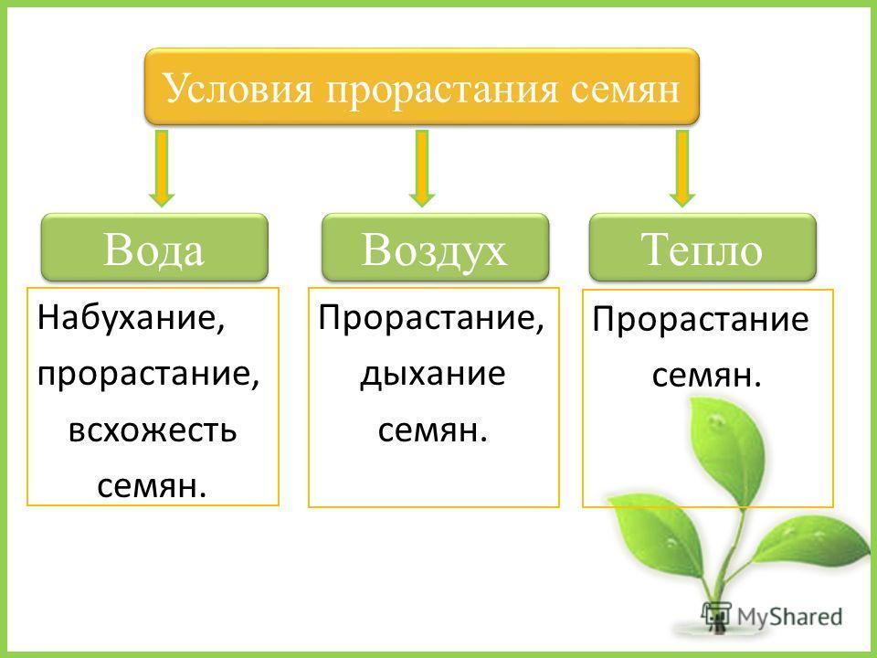 Набухание, прорастание, всхожесть семян. Условия прорастания семян Тепло Вода Воздух Прорастание семян. Прорастание, дыхание семян.